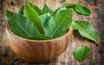 Mediterranean herbs: Addition for dishes with character